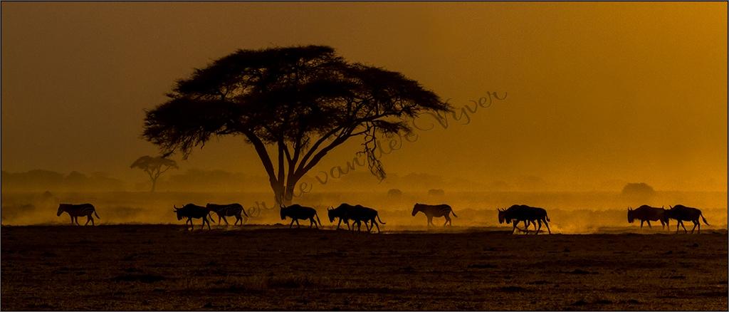 Bernie van der Vyver Wildlife Artist - Landscape Photography